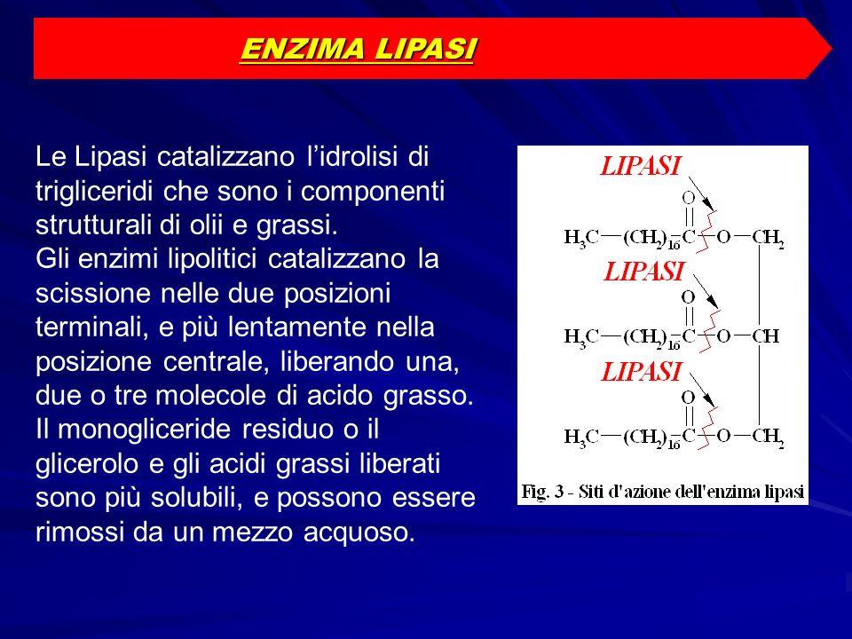 ENZIMA LIPASI Le Lipasi catalizzano l'idrolisi di trigliceridi che sono i componenti strutturali di olii e grassi.