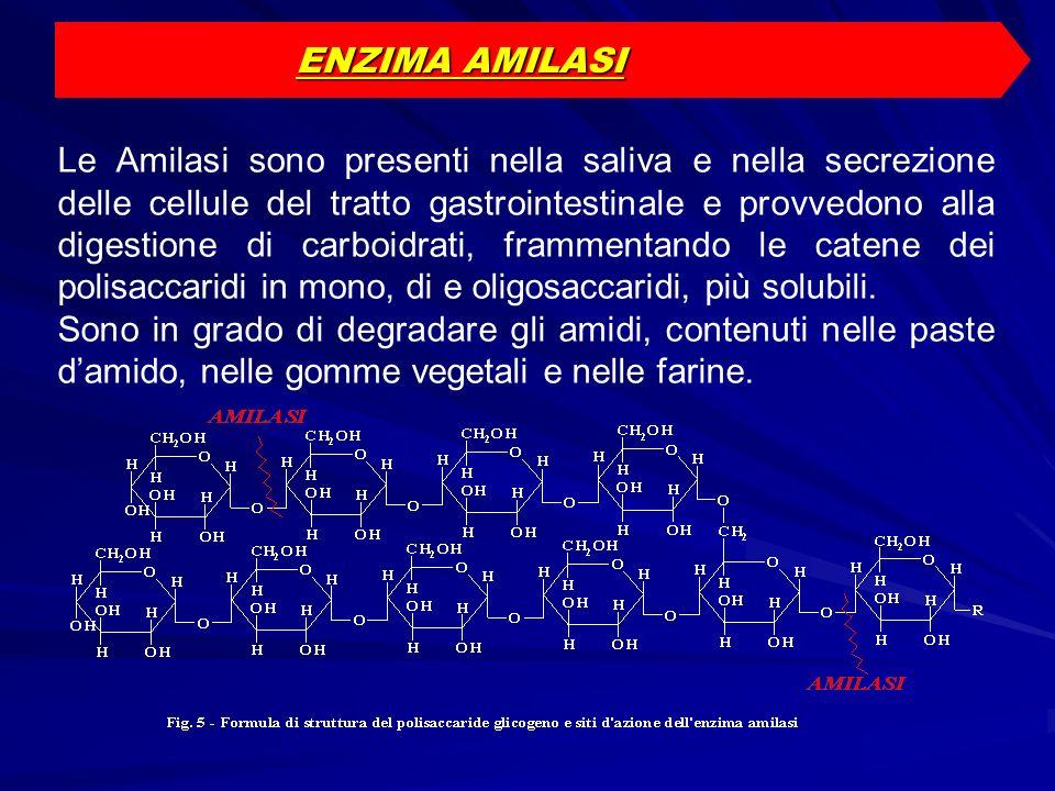 ENZIMA AMILASI
