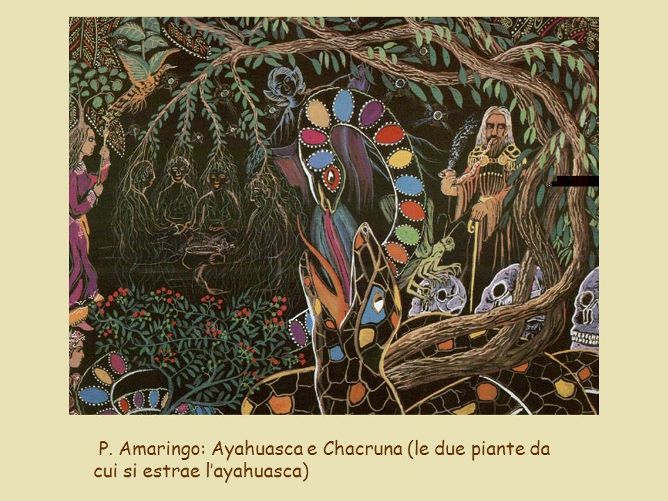 P. Amaringo: Ayahuasca e Chacruna (le due piante da cui si estrae l'ayahuasca)