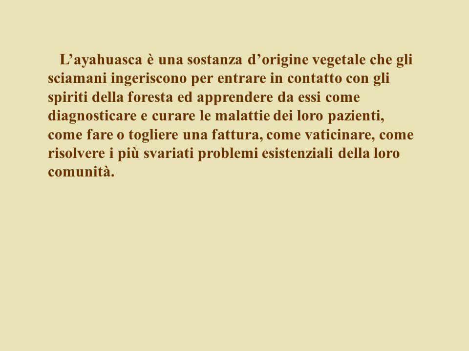 L'ayahuasca è una sostanza d'origine vegetale che gli sciamani ingeriscono per entrare in contatto con gli spiriti della foresta ed apprendere da essi come diagnosticare e curare le malattie dei loro pazienti, come fare o togliere una fattura, come vaticinare, come risolvere i più svariati problemi esistenziali della loro comunità.
