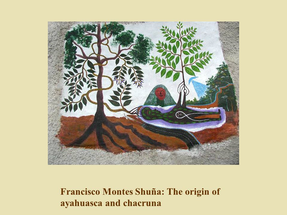 Francisco Montes Shuña: The origin of ayahuasca and chacruna