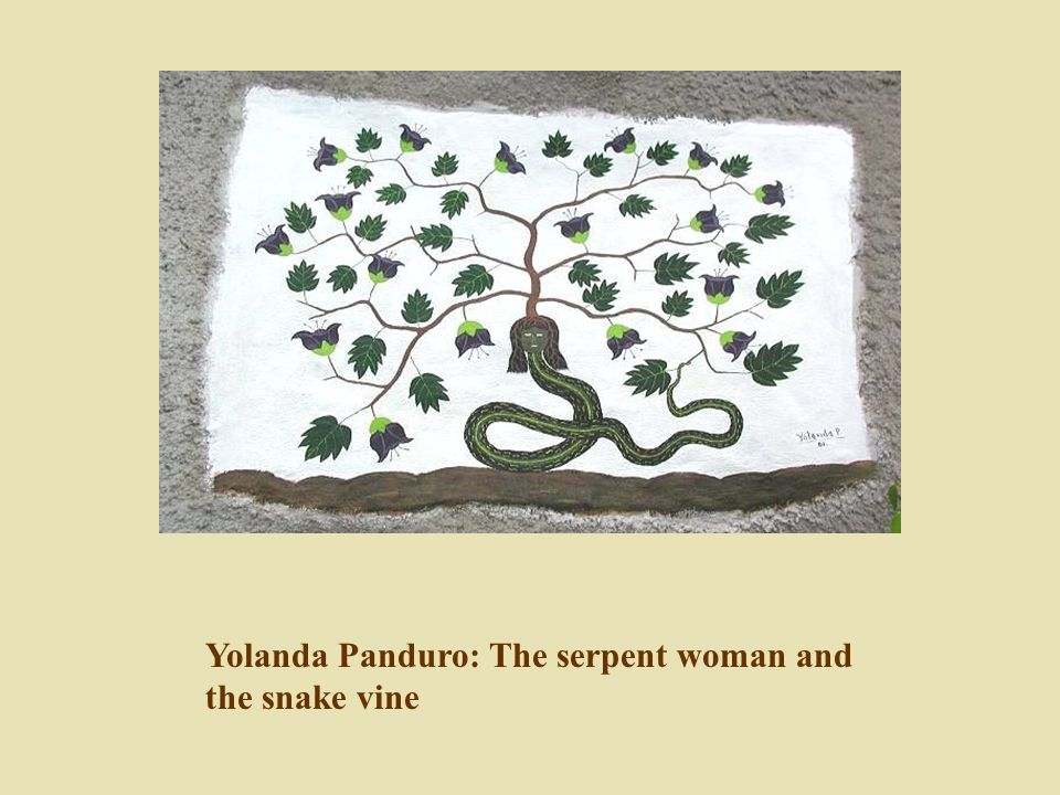 Yolanda Panduro: The serpent woman and the snake vine