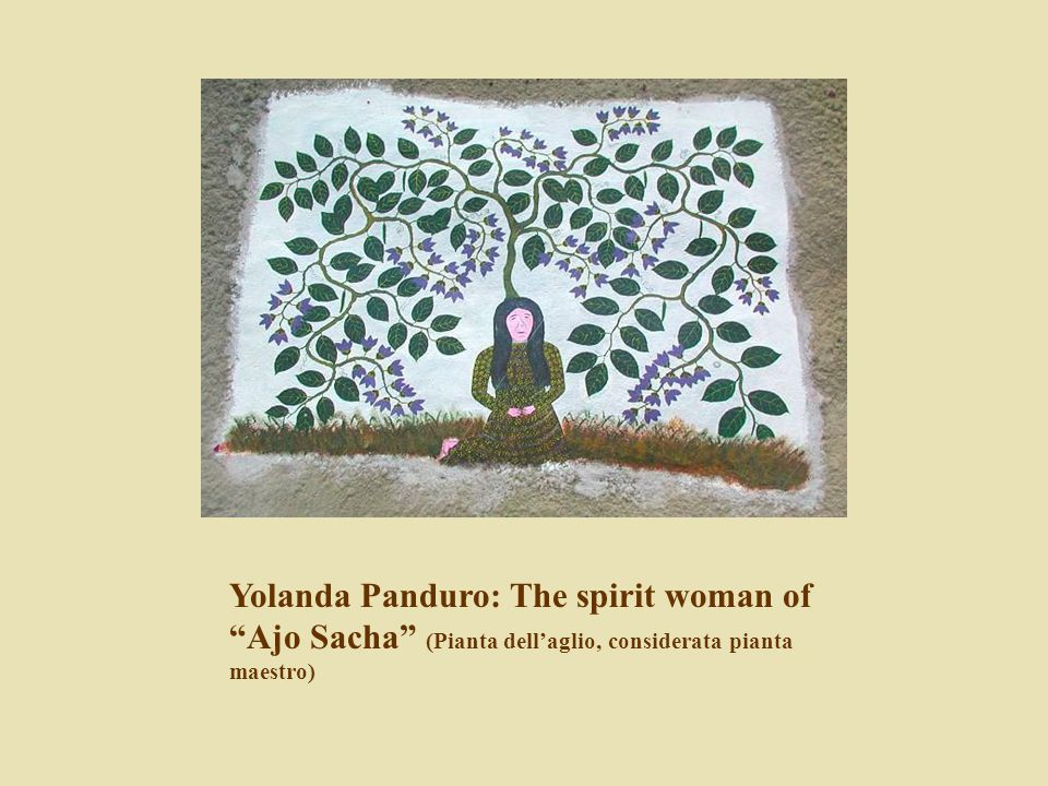 Yolanda Panduro: The spirit woman of Ajo Sacha (Pianta dell'aglio, considerata pianta maestro)