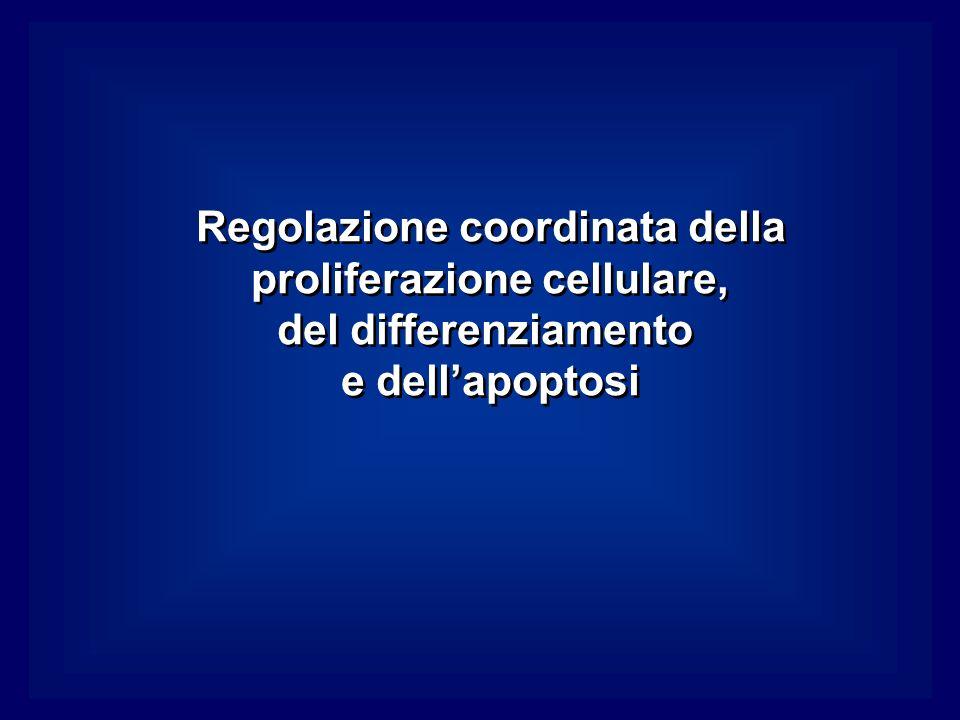 Regolazione coordinata della proliferazione cellulare,