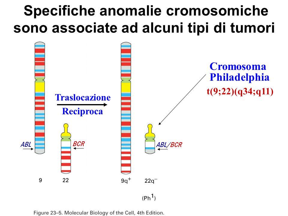Specifiche anomalie cromosomiche