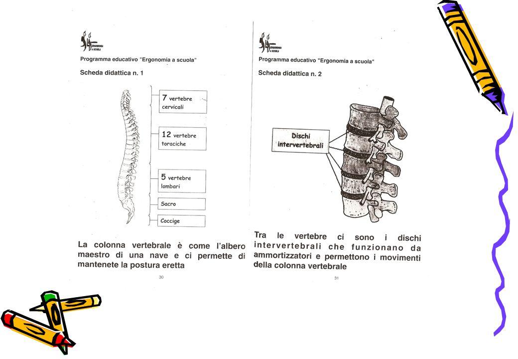 La colonna vertebrale: