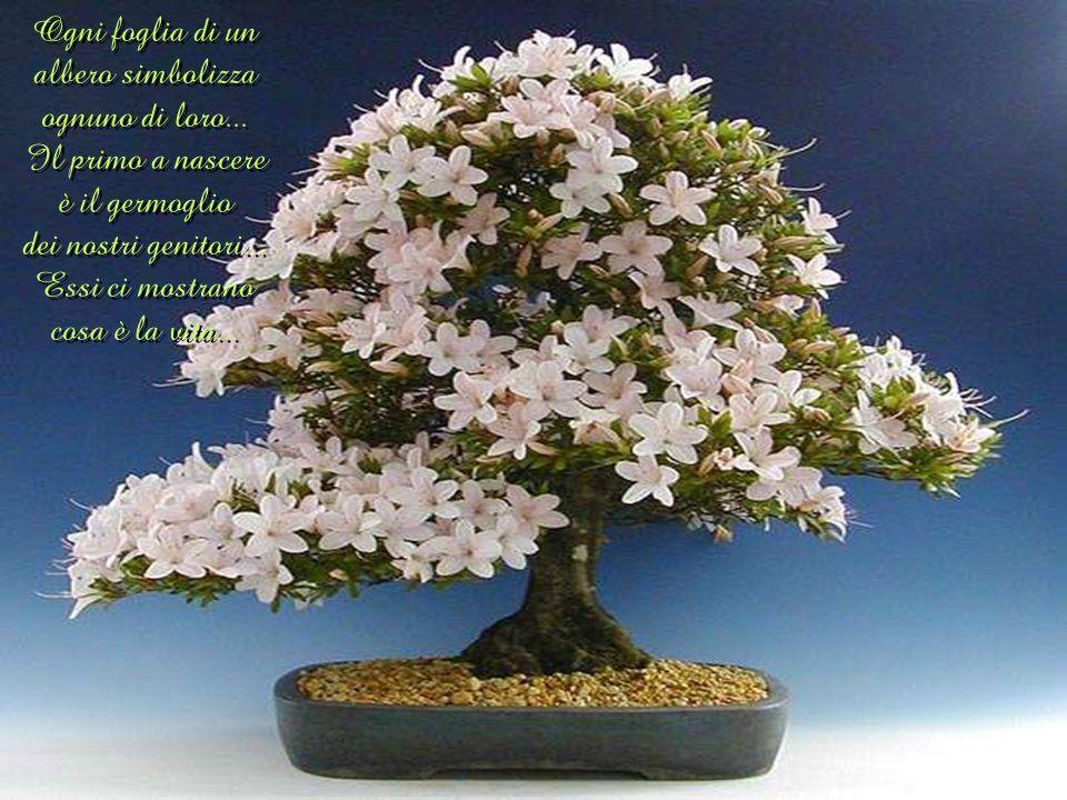 Ogni foglia di un albero simbolizza ognuno di loro
