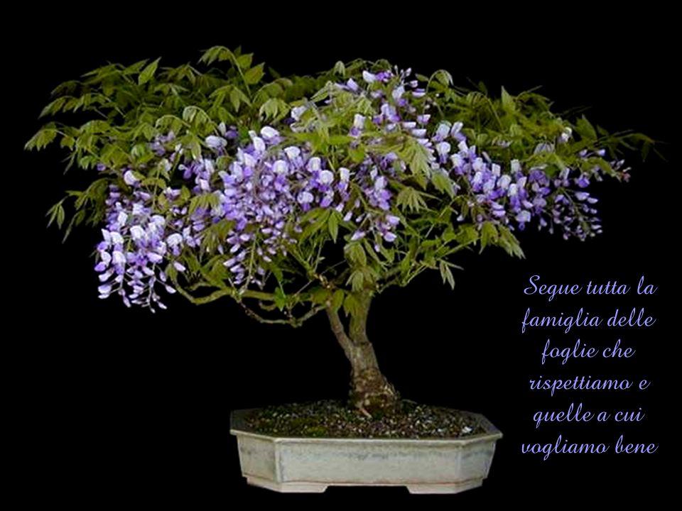 Segue tutta la famiglia delle foglie che rispettiamo e quelle a cui vogliamo bene