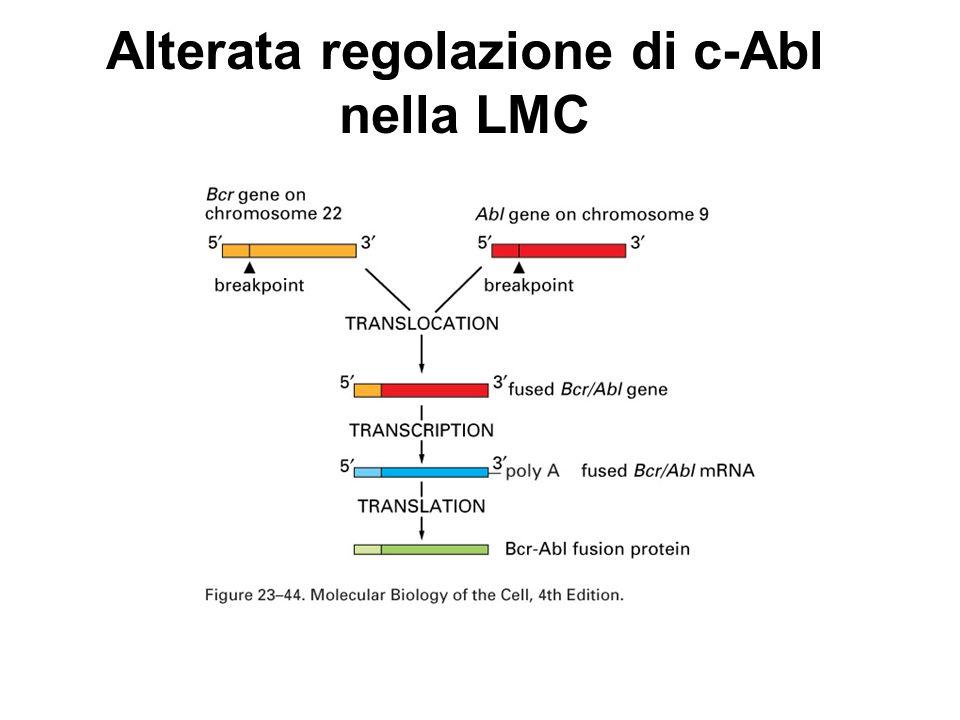 Alterata regolazione di c-Abl