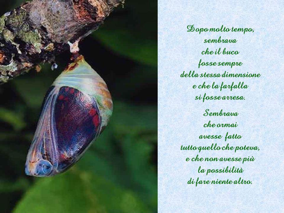 Dopo molto tempo, sembrava che il buco fosse sempre della stessa dimensione e che la farfalla si fosse arresa.