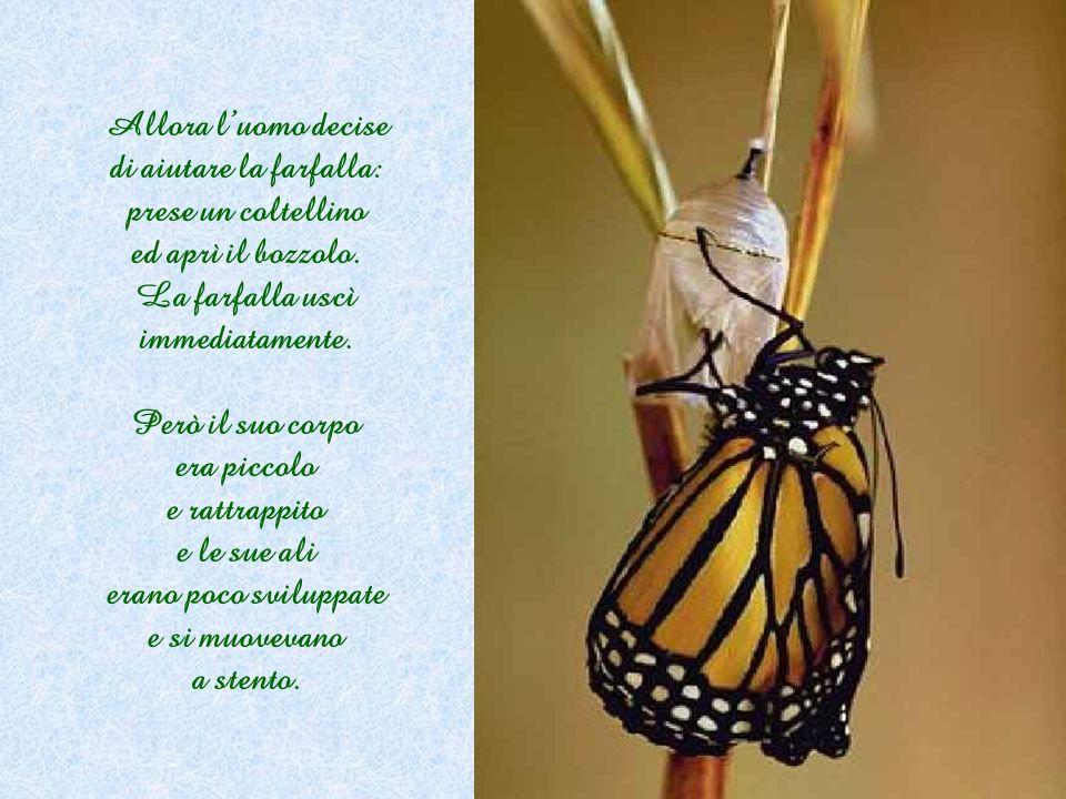 Allora l'uomo decise di aiutare la farfalla: prese un coltellino ed aprì il bozzolo. La farfalla uscì immediatamente.
