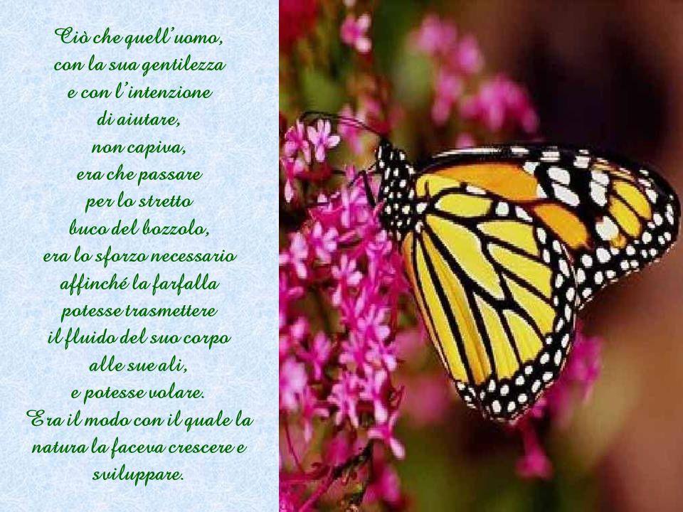 Ciò che quell'uomo, con la sua gentilezza e con l'intenzione di aiutare, non capiva, era che passare per lo stretto buco del bozzolo, era lo sforzo necessario affinché la farfalla potesse trasmettere il fluido del suo corpo alle sue ali, e potesse volare.