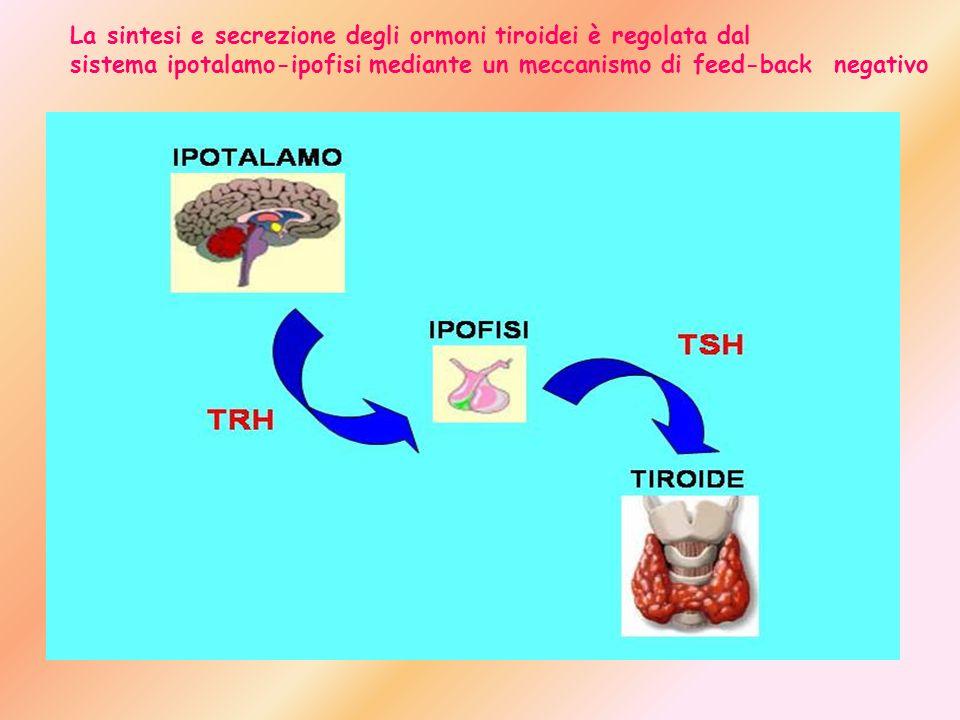 La sintesi e secrezione degli ormoni tiroidei è regolata dal