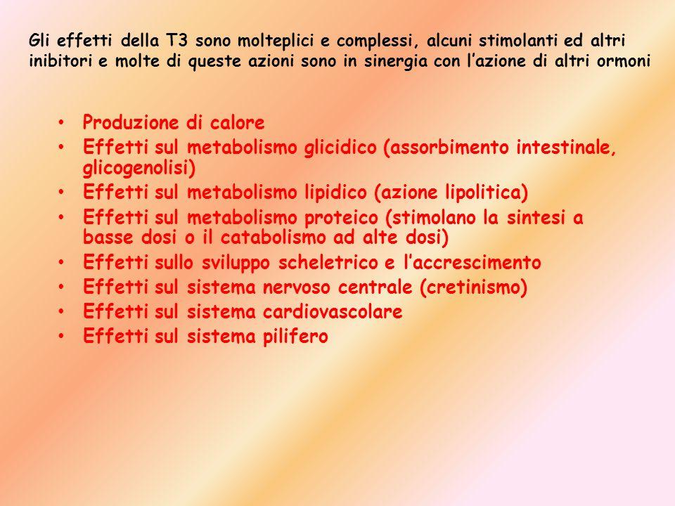 Effetti sul metabolismo lipidico (azione lipolitica)