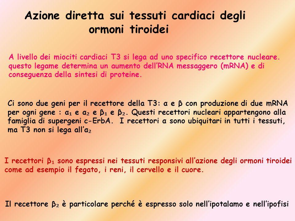 Azione diretta sui tessuti cardiaci degli ormoni tiroidei
