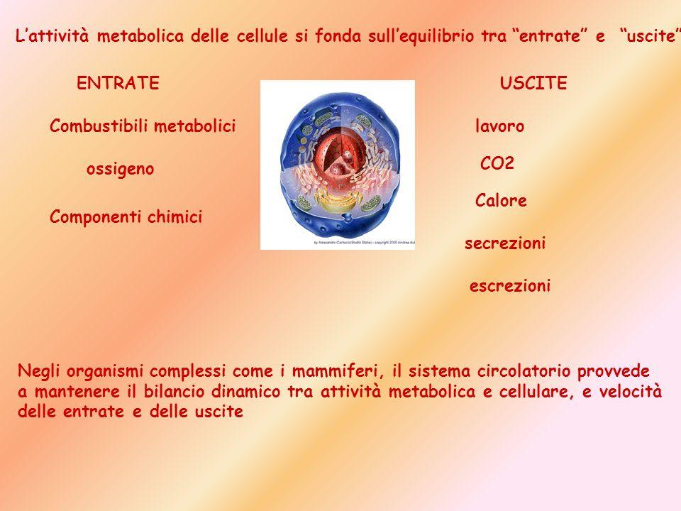 L'attività metabolica delle cellule si fonda sull'equilibrio tra entrate e uscite