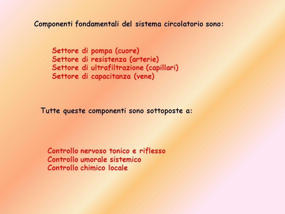 Componenti fondamentali del sistema circolatorio sono: