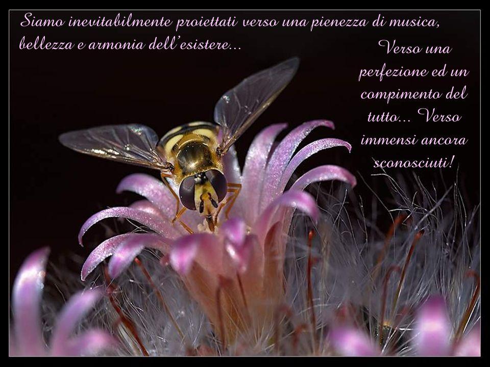 Siamo inevitabilmente proiettati verso una pienezza di musica, bellezza e armonia dell'esistere...