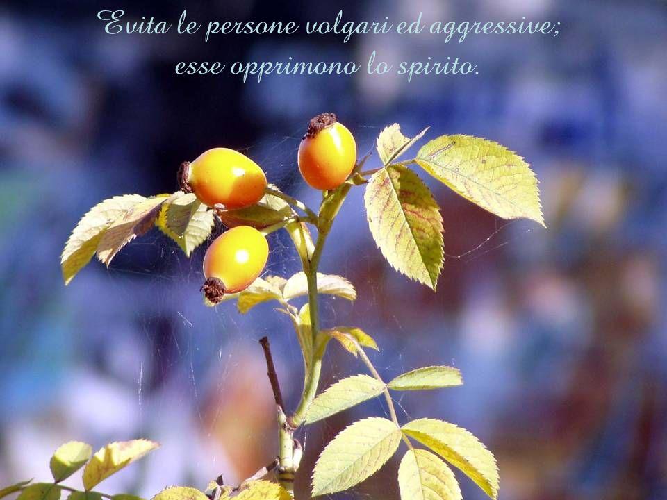 Evita le persone volgari ed aggressive; esse opprimono lo spirito.