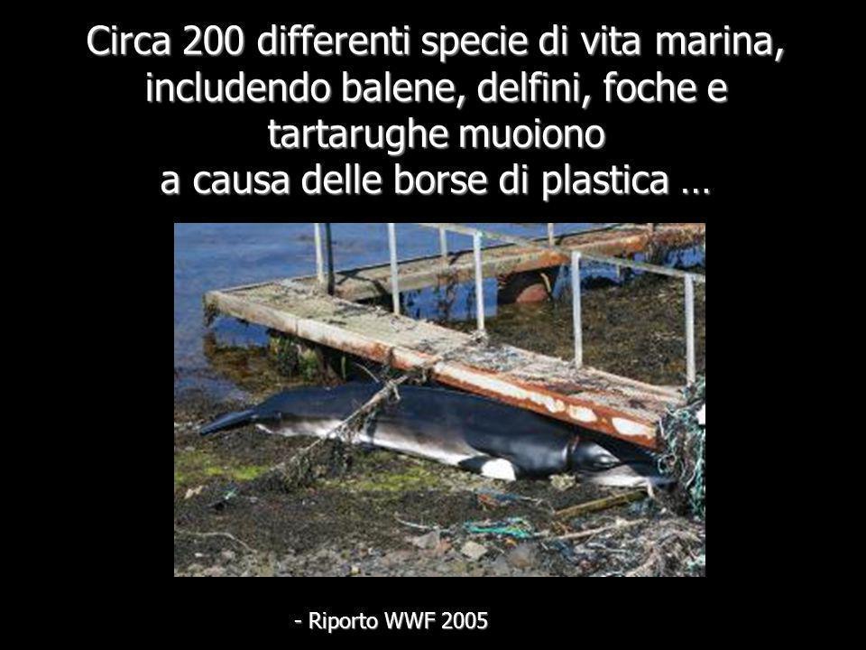 Circa 200 differenti specie di vita marina, includendo balene, delfini, foche e tartarughe muoiono a causa delle borse di plastica …