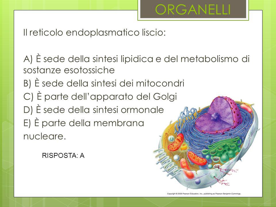 ORGANELLI Il reticolo endoplasmatico liscio: