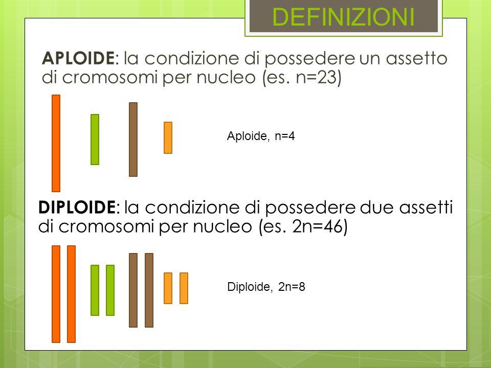 DEFINIZIONIAPLOIDE: la condizione di possedere un assetto di cromosomi per nucleo (es. n=23) Aploide, n=4.