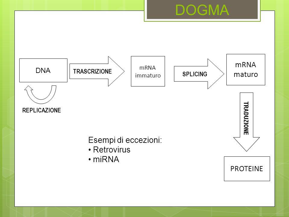 DOGMA mRNA maturo Esempi di eccezioni: Retrovirus miRNA PROTEINE DNA