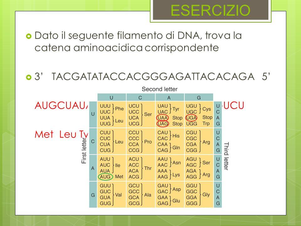 ESERCIZIODato il seguente filamento di DNA, trova la catena aminoacidica corrispondente. 3' TACGATATACCACGGGAGATTACACAGA 5'