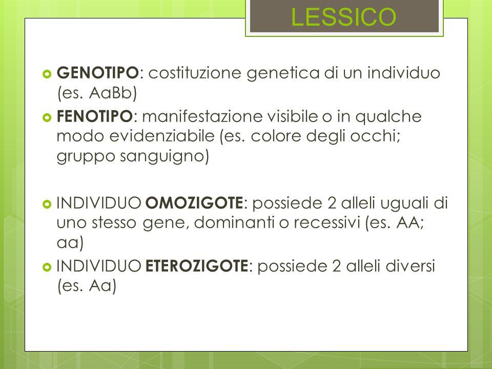 LESSICO GENOTIPO: costituzione genetica di un individuo (es. AaBb)