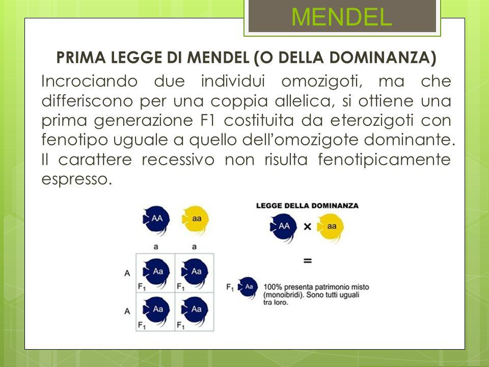PRIMA LEGGE DI MENDEL (O DELLA DOMINANZA)