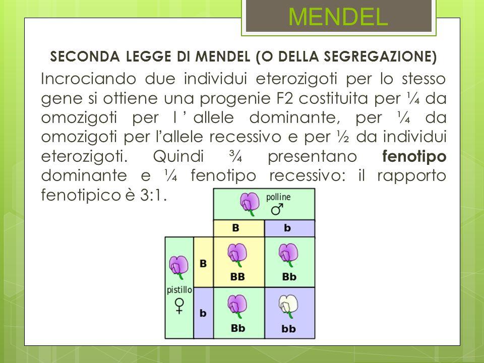 SECONDA LEGGE DI MENDEL (O DELLA SEGREGAZIONE)