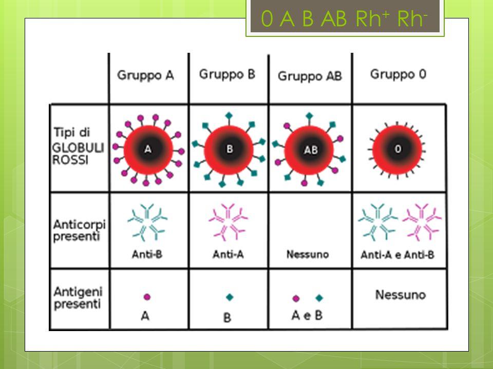 0 A B AB Rh+ Rh-