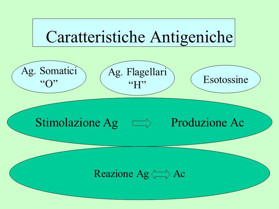 Caratteristiche Antigeniche