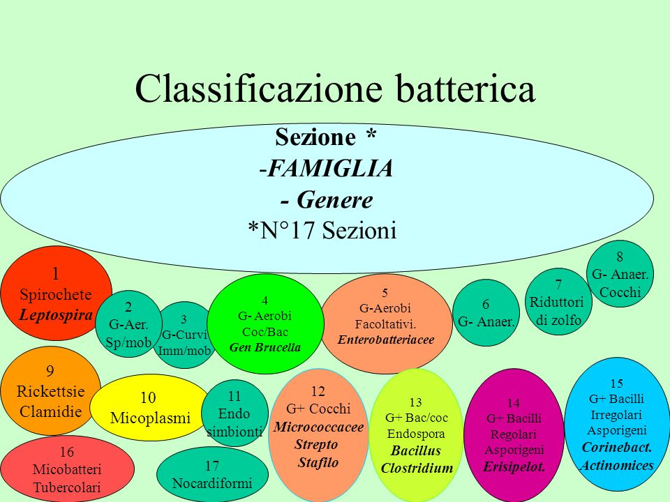 Classificazione batterica