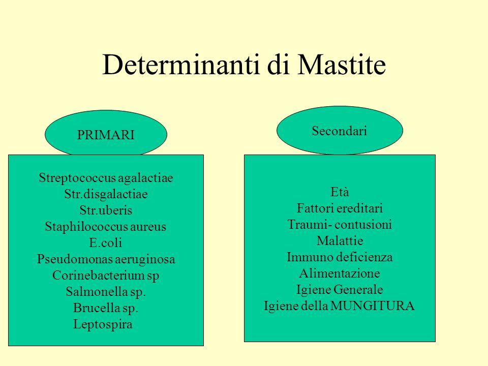 Determinanti di Mastite
