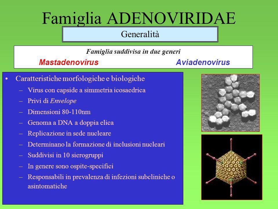 Famiglia ADENOVIRIDAE