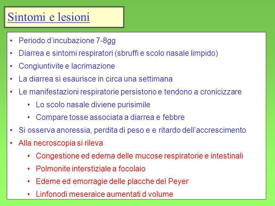 Sintomi e lesioni Periodo d'incubazione 7-8gg
