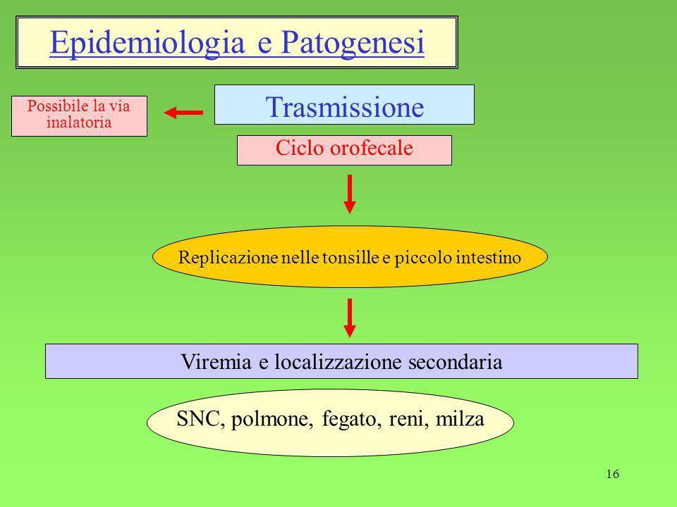 Epidemiologia e Patogenesi