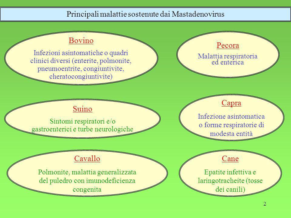 Principali malattie sostenute dai Mastadenovirus