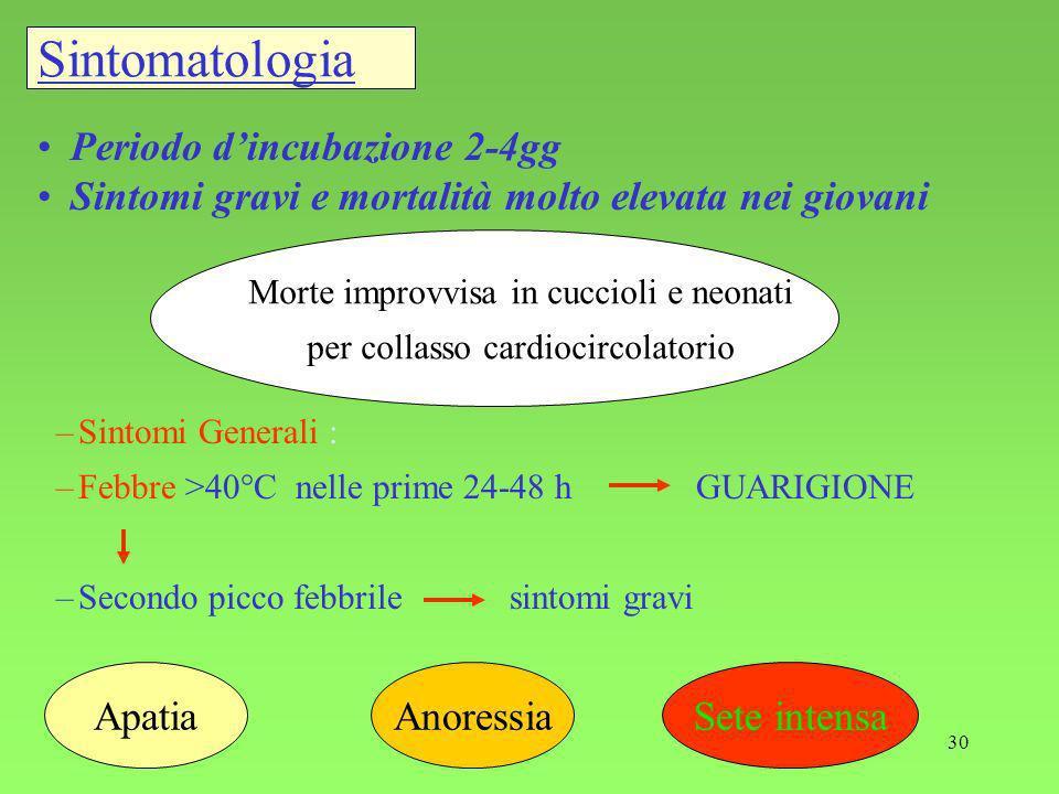 Sintomatologia Periodo d'incubazione 2-4gg