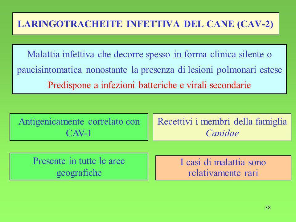 LARINGOTRACHEITE INFETTIVA DEL CANE (CAV-2)