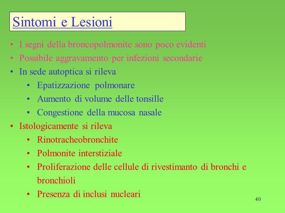 Sintomi e Lesioni I segni della broncopolmonite sono poco evidenti