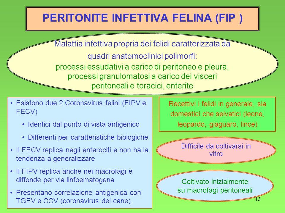 PERITONITE INFETTIVA FELINA (FIP )