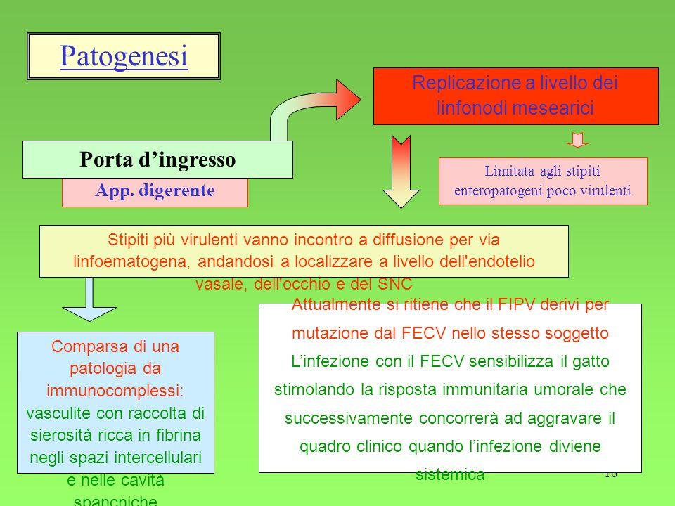 Patogenesi Porta d'ingresso