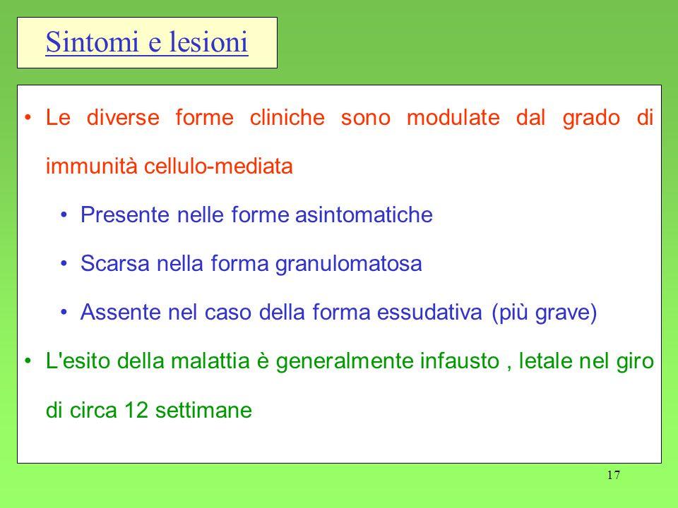 Sintomi e lesioni Le diverse forme cliniche sono modulate dal grado di immunità cellulo-mediata. Presente nelle forme asintomatiche.