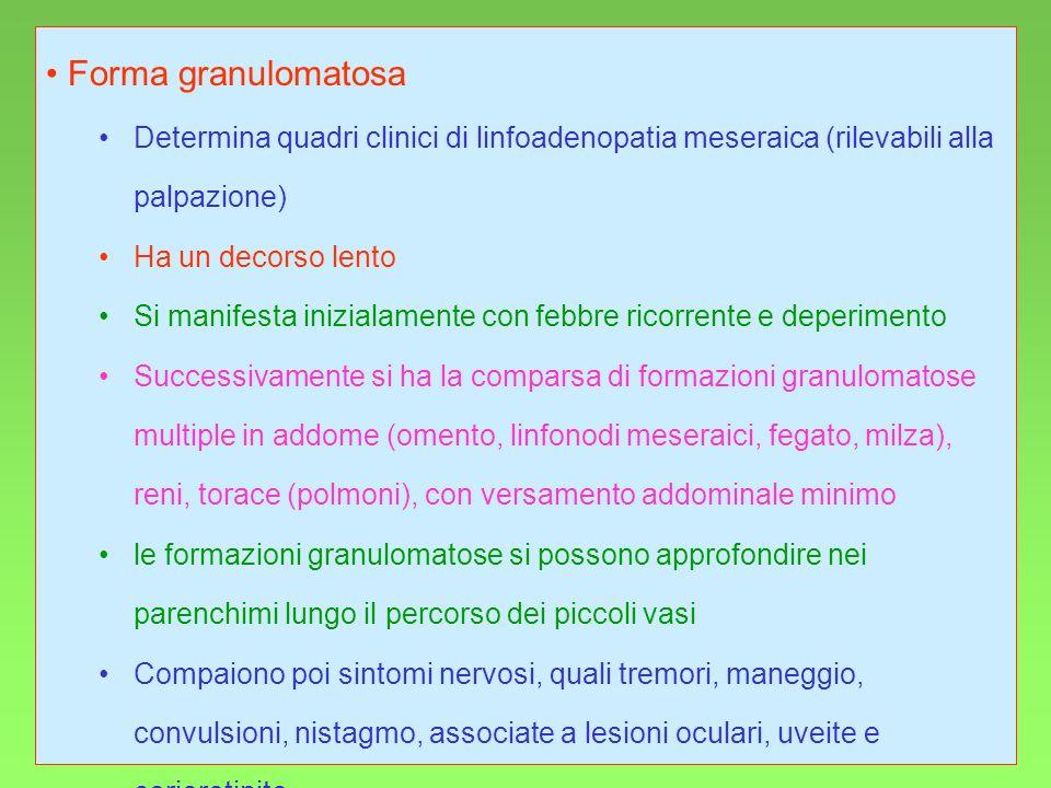 Forma granulomatosa Determina quadri clinici di linfoadenopatia meseraica (rilevabili alla palpazione)