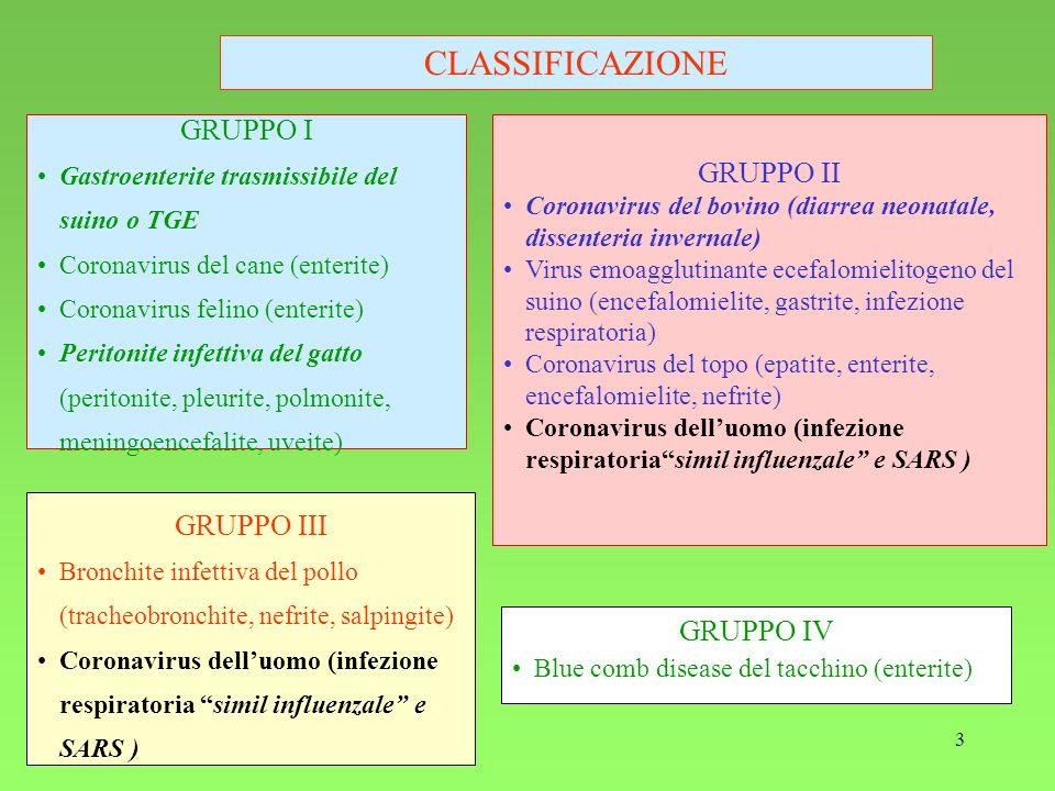 CLASSIFICAZIONE GRUPPO I GRUPPO II GRUPPO III GRUPPO IV