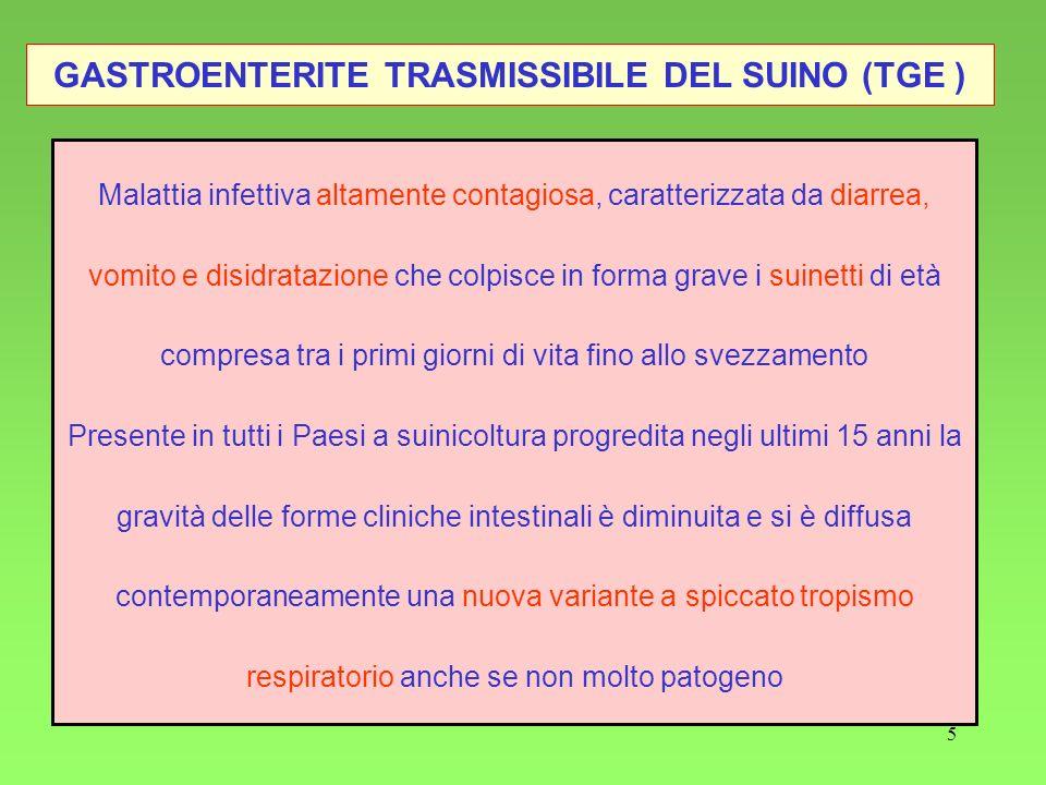 GASTROENTERITE TRASMISSIBILE DEL SUINO (TGE )