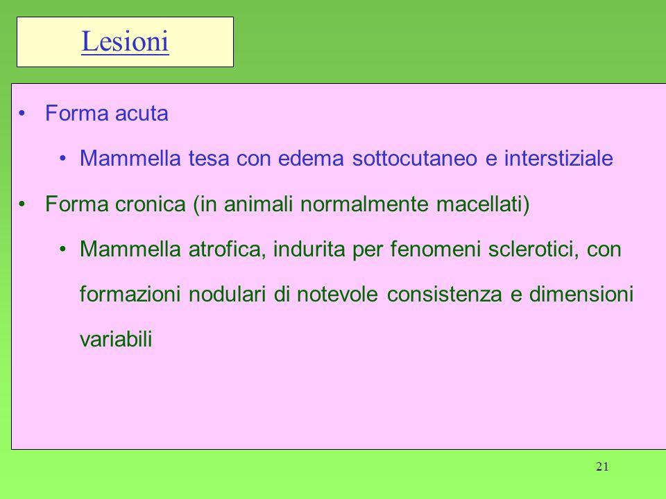 Lesioni Forma acuta. Mammella tesa con edema sottocutaneo e interstiziale. Forma cronica (in animali normalmente macellati)