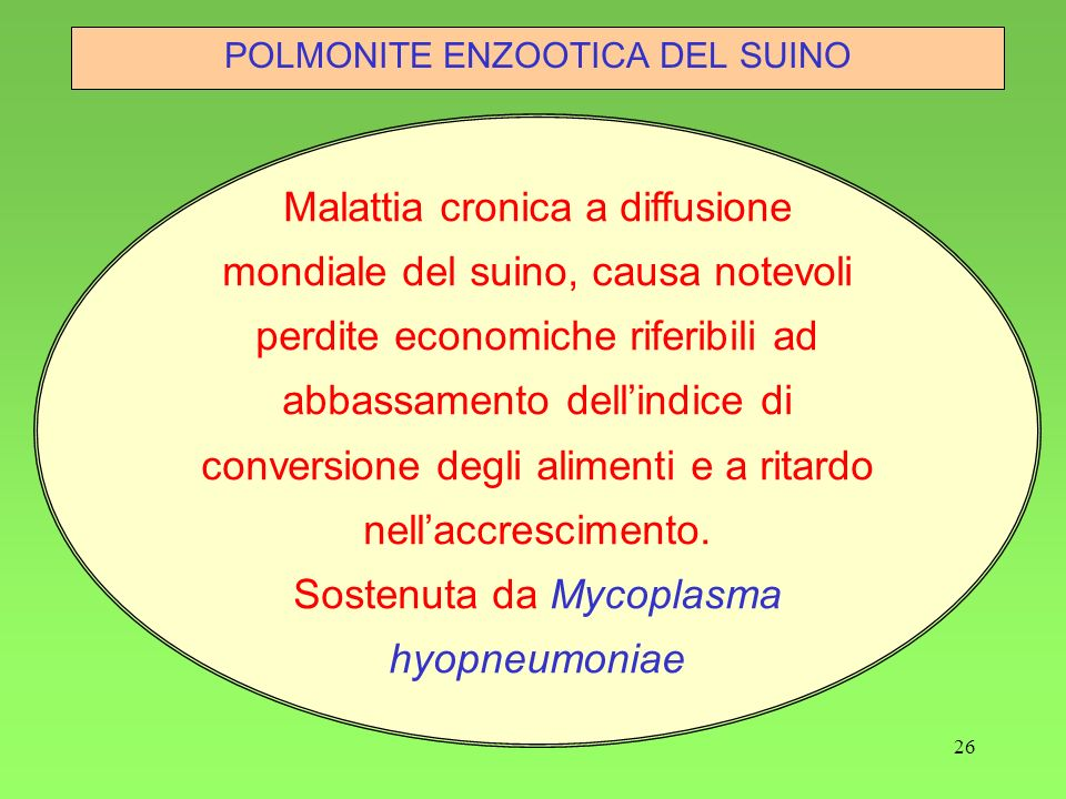 Sostenuta da Mycoplasma hyopneumoniae